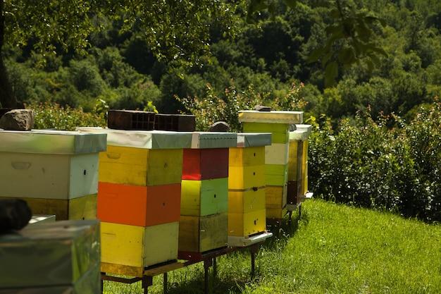 꿀벌이 많은 수도원 양봉장 화창한 날 들판에서 건강한 꿀을 생산하는 좋은 날