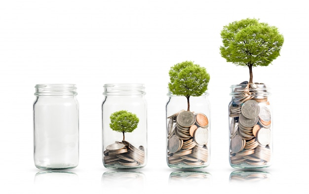 Money coins and tree growing in jar.