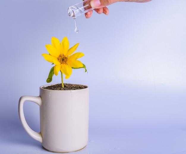 お金の成長の概念。カップに黄色い花に水をまく女性の手。