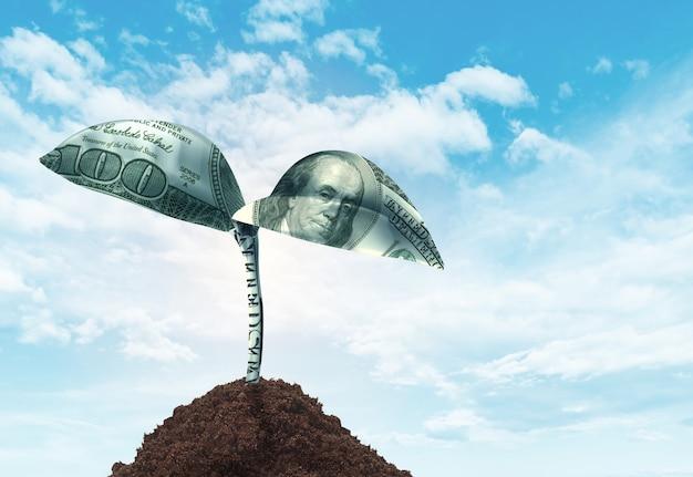 Money growth concept Premium Photo