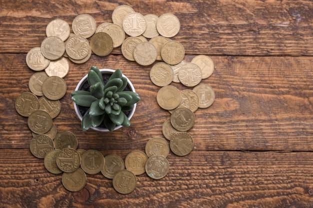 Экономия денег, инвестиции, зарабатывание денег на будущее, концепция управления финансовым благосостоянием. денежное дерево на деревянном фоне с золотыми монетами вокруг.
