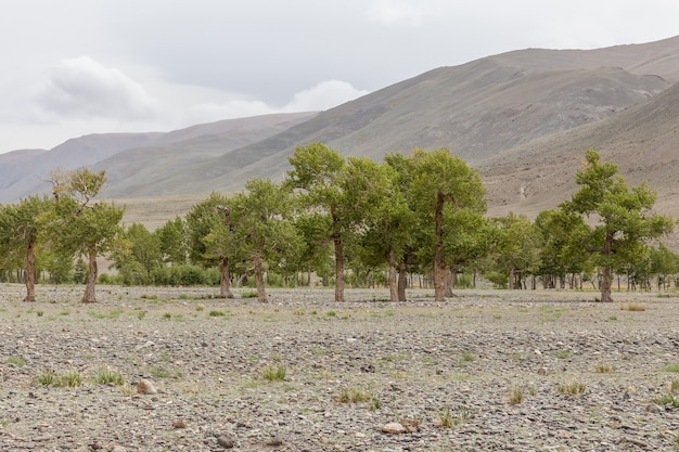 Mongolia landscape. altai tavan bogd national park in bayar-ulgii.