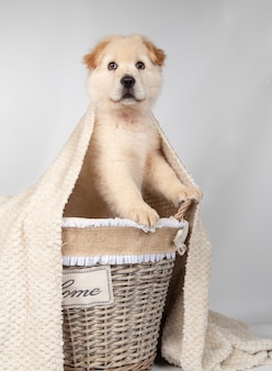 Mongrel puppy inside a basket