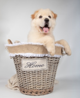 Mongrel puppy inside basket