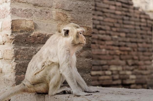 Monkey are sitting on brick.