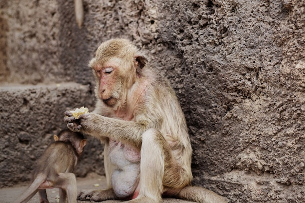 Monkey and baby in a zoo.