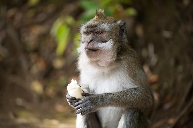 サルは野生でバナナを食べる