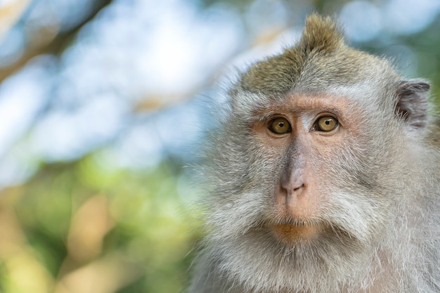インドネシア、バリ島ウブドの神聖な猿の森の猿の家族。閉じる