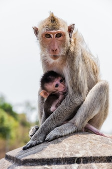 Monkey family in the thailand.