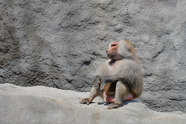 Monkey family in the zoo