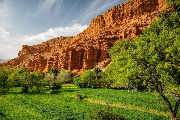 Monkey fingers in the dades valley, marrakech, morocco Premium Photo