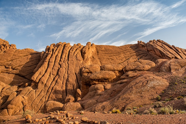 Monkey fingers in the dades valley, marrakech, morocco