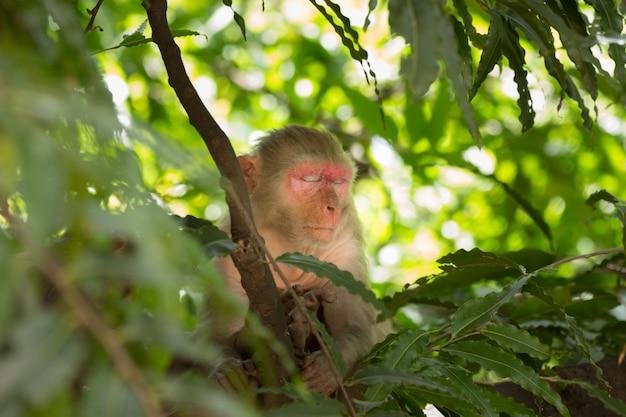 野生のジャングルの中で木の昼寝をしている猿
