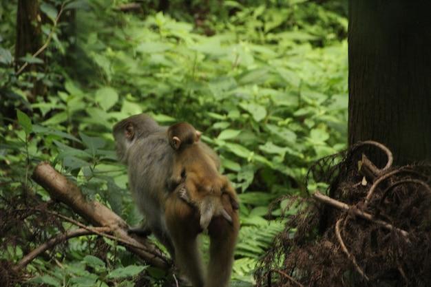 자연에서 원숭이