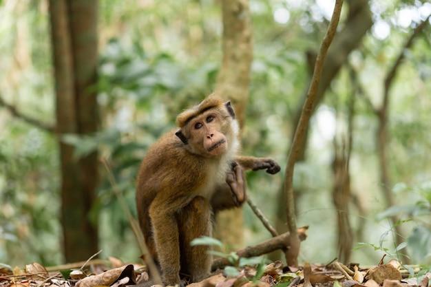 Обезьяна в джунглях. естественная среда обитания крупным планом.