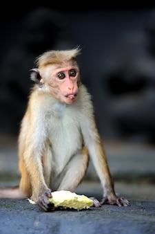 生きている自然の中の猿