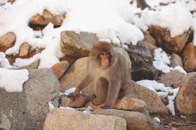 自然の中の猿