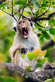 Обезьяна в дикой природе на острове шри-ланка