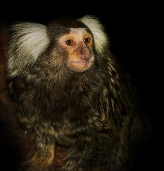 동물원의 원숭이