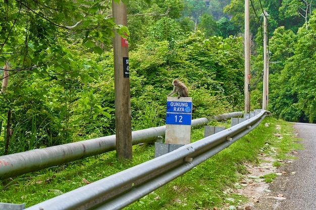 The monkey is sitting on a road sign on the side of the road. monkeys in asia.