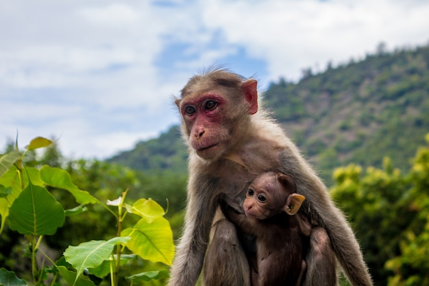 A monkey and its baby