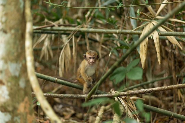 Monkey in the jungle. natural habitat close up