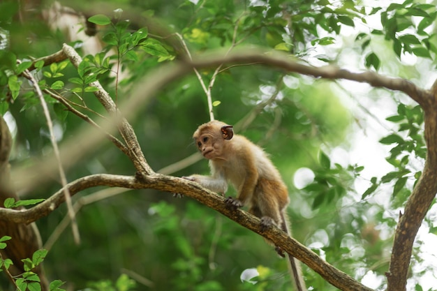 Monkey in the jungle. natural habitat close up.