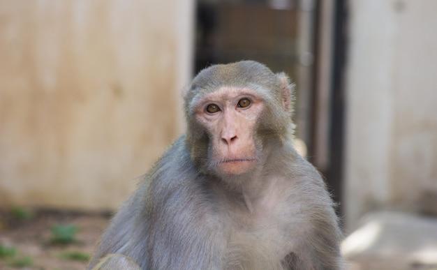 猿が不思議なことに目をそむける