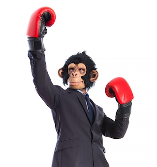 Monkey man with boxing gloves