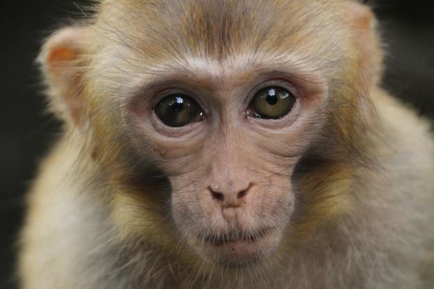 Scimmia in natura