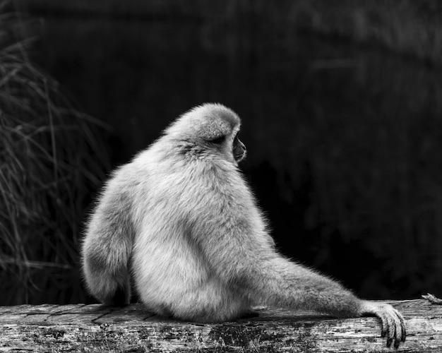 Monkey resting at the lake