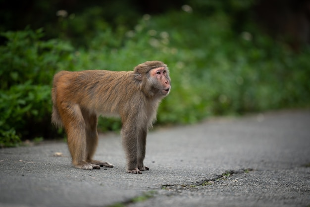 Monkey at the road