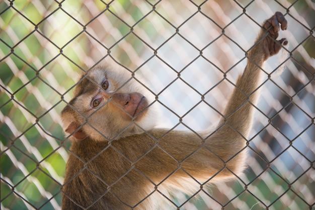 Monkey in sad cage.