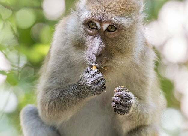 果物を食べて木の枝に座っている猿