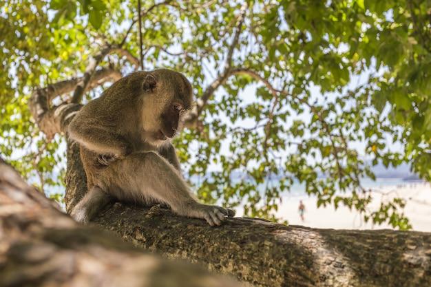 Обезьяна сидит на ветке дерева