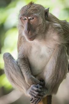 木の枝に座っている猿