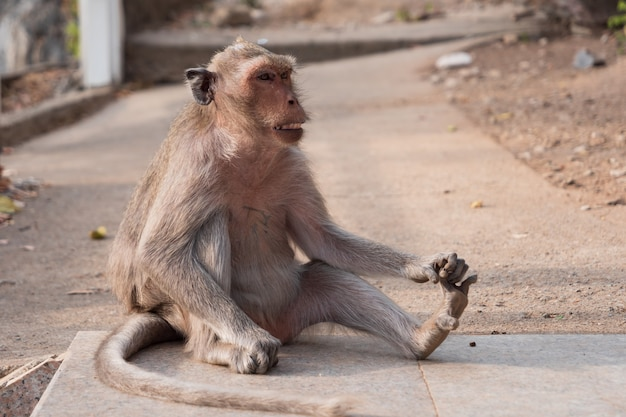 外に座っている猿のクローズアップ