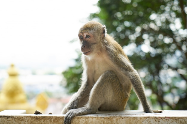 Monkey sitting on a white fence with a tree in the background