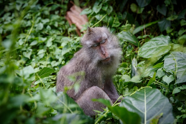 Monkey sleeping with tilted head in the jungle