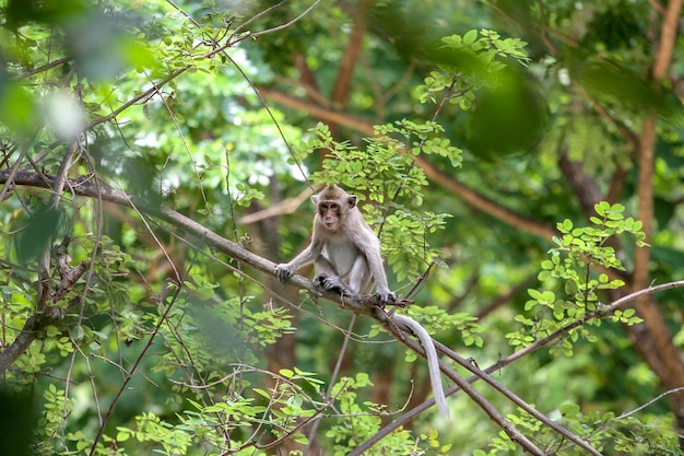 The monkey stop on branch tree in nature at thailand