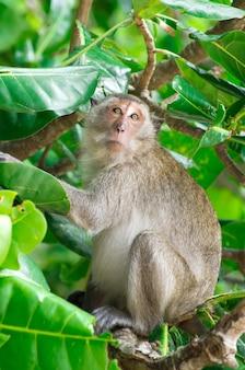 Monkey on a tree branch