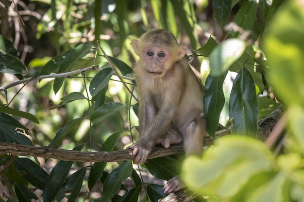 Monkey on tree in forest closeup