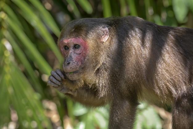 Scimmia sull'albero in primo piano della foresta