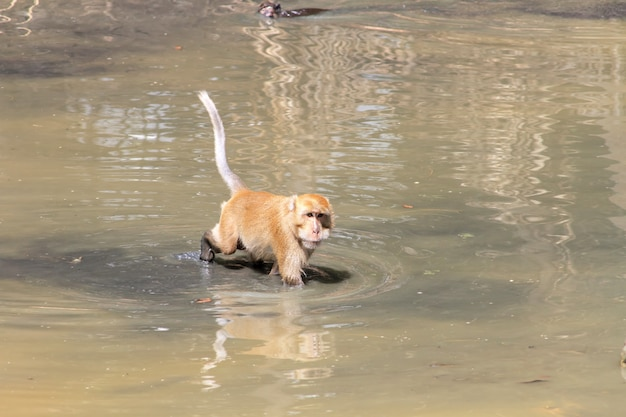 Monkey were playing pool in the tropical forests
