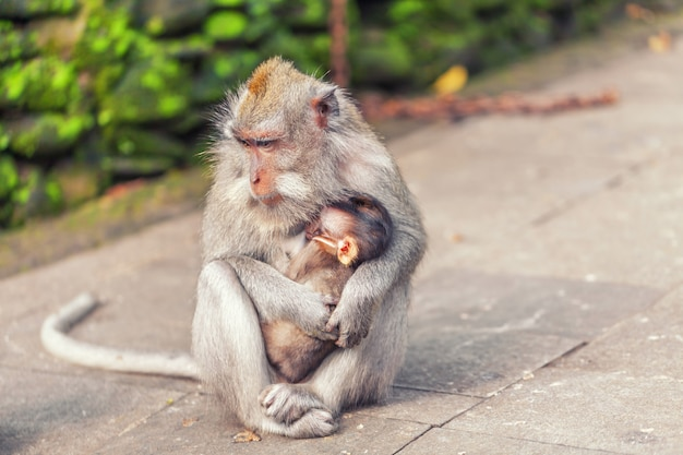 Monkey with baby in park