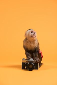 Monkey with retro vintage camera