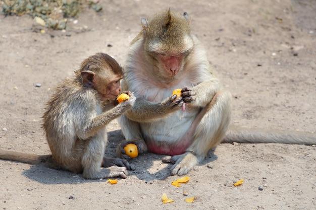 サルはオレンジを食べています。