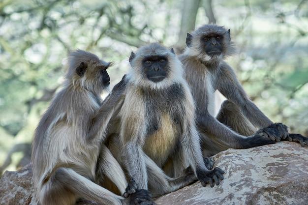 Monkeys in the city.