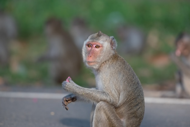 Monkeys come to wait for food from people on the street.