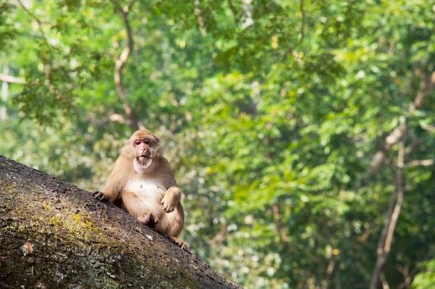 Обезьяны в тропическом лесу в таиланде